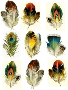 Set of 9 feathers Temporary tattoos by WildLifeDream on Etsy, temporarry tattoo Set of 9 feathers - Temporary tattoos Watercolor Feather, Feather Painting, Feather Art, Watercolor Paintings, Feather Drawing, Tattoo Set, Vintage Birds, Vintage Keys, Collage Sheet