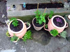 Herbs That Grow Well Together | Garden Guides