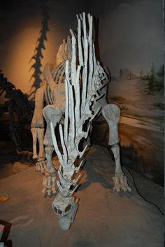 Facing down the spine-backed sauropod fossil
