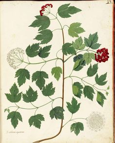 vintage printable - botanical, animal, juvenile, mythology etc. - public domain images believed to be free to use without restriction in the US