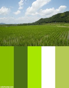Field Of Green Color Scheme