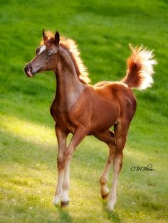 . Easter and Spring Horses. Horses Learn about #HorseHealth #HorseColic www.loveyour.horse