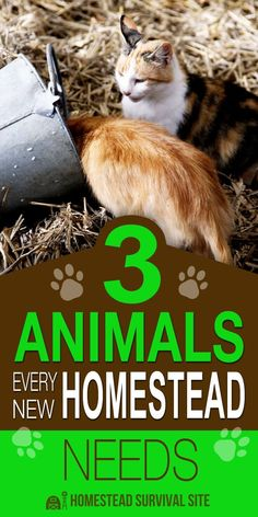 3 Animals Every New Homestead Needs. When people talk about homestead animals, they're usually referring to cows, goats, chickens, and other livestock. But in this video from Becky's Homestead, she talks about other types of animals that every homestead should have. #Homesteadsurvivalsite #Animalsonthehomestead #Livingoffthegrid