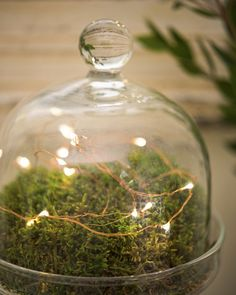 Fairy Lights on Copper Wire 10' or 50' Battery Operated +Timer