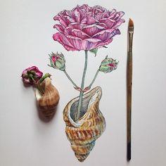 rose & shell.   Noel Badges Pugh