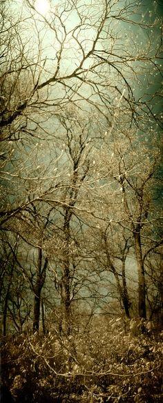 - Tree with glowing buds - by Tony Karp