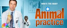 Animal Practice, there is where Andy Botwin went!!