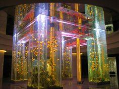 Awesome Fish Tanks Aquariums