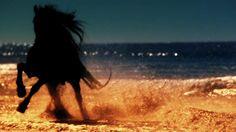 Beautiful Black Stallion making the Desert proud itself!