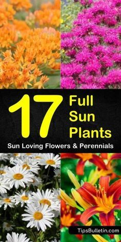 Flowering Ground Cover Perennials, Partial Sun Perennials, Long Blooming Perennials, Perennial Grasses, Flowers Perennials, Shade Perennials, Flowering Bushes Full Sun, Perrenial Flowers, Full Sun Annuals