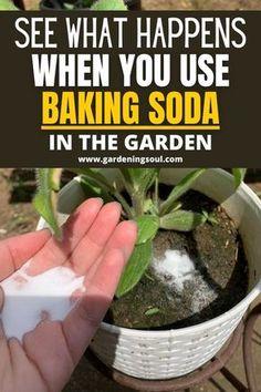 Garden Yard Ideas, Lawn And Garden, Garden Projects, Gardening For Beginners, Gardening Tips, Gemüseanbau In Kübeln, Baking Soda Uses, Home Vegetable Garden, Container Gardening Vegetables