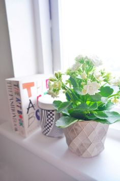 Interior Stylist and DIY Blogger Gemma Gear shares her favourite houseplants to brighten up your home office. I've recently become obsessed with adding kalanchoe succulents (AKA - The Flaming Katy) into my office to create a workspace that I feel most comfortable in. It seems that work-from-home life is becoming the new normal for a lot of us nowadays, so it's really important to create a working environment that you love. #shelfdecor #officeideas #alwayskalanchoe