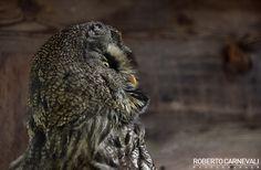 Portrait of Eagle Owl | © Roberto Carnevali