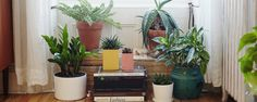 A collection of easy-care houseplants in a mix of ceramic and terra cotta pots & planters - via The Sill, thesill.com