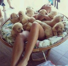 Surrounded by puppies