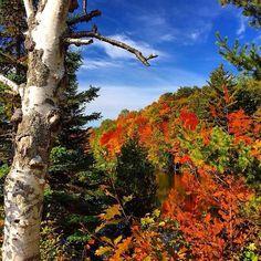 12 Amazing Michigan Fall Foliage Photos