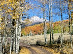 Bonanza Colorado in the fall. Aspens turning yellow, orange an gold, breath taking view.