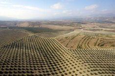 Vista aérea del paisaje de olivares en el Parque Natural de Sierra Mágina