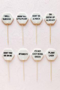A little plant encouragement