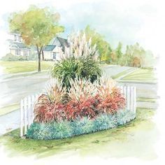 Ornamental Grass Garden  .Add dramatic year-round color to your landscape with our Ornamental Grass Corner Garden. Buy our money-saving Ornamental Grass Collection designed to fit a space 6' wide by 6' deep and save over $4.00 from our regular price. Each garden contains: 1 White Pampas Grass 3 Flame Grass 5 Blue Oat Grass  Both Pampas Grass and Flame Grass begin producing plumes in summer. SEE WEBSITE FOR MORE PACKAGED IDEAS FOR FLOWERS ETC.