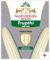 Maize : Trupthi – NMH 4040 Plant height : Tall (270-280 cms) Duration : Kharif-105-110 days, Rabi-125-130 days Ear placement : Medium(130-135 cms Grain type and colour : Semi-dent, White Ear : Cylindrical Special features/USPs :       * Milky White Bold kernels     * Uniform cob size     * High Shelling (80-82%)
