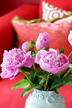 Årets Farge 2017 fra Fargerike, Norges største fargehandel, er rødt. Stikkordene for fargen er pasjon, kraft og vitalitet. #åretsfarge2017#rød#rødt#sofa#bord#blomst#puter#inspirasjon#inspiration#red#fargerikt#detaljer#interiør#Fargerike Rose, Flowers, Plants, Pink, Plant, Roses, Royal Icing Flowers, Flower, Florals