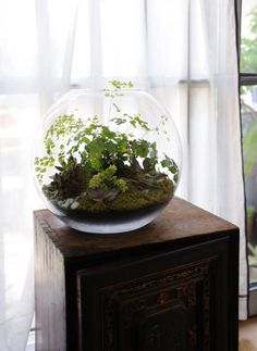 Maybe I could keep ferns alive in Colorado if I planted them in a terrarium.