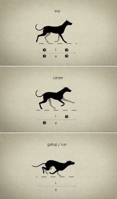 Information et animation. Animal Sketches, Animal Drawings, Art Drawings, Animation Reference, Art Reference, Animation Tutorial, Cool Animations, Dog Quotes, Drawing Techniques