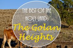 The Golan Heights is a controversial plot of land seized from the Syrians in the Six Day War, but it is worth a visit to understand the importance of this land to present day Israel!