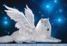 Angel Star wolf by Whitewolf Photography, via Flickr