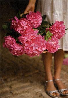 Bouquet of Peonies My Flower, Fresh Flowers, Pretty In Pink, Beautiful Flowers, Pink Flowers, Lotus Flower, Beautiful Life, Colorful Roses, Floral Arrangements