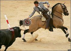 bullfighting horses | In the first stage of the fight the bull is tested for ferocity by the ...