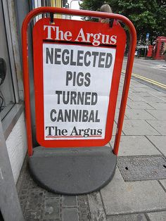 The local newspaper for Brighton & Hove is The Argus. One of their headlines: 'Neglected pigs turned cannibal'