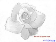 how to draw a rose in pencil step 5