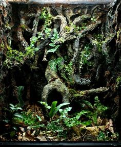 Photos Of Vines And Vivariums - The Green Oasis