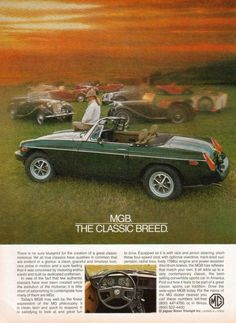 """An original advertisement features a 1980 MGB convertible car. In a field with other MG car classics. """"The The Classic Breed"""" An original 1980 MGB sports car co Bmw Classic Cars, Classic Sports Cars, Classic Auto, Classic Mini, Nanjing, Shanghai, British Sports Cars, British Car, New Luxury Cars"""