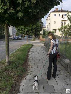 29.5.2016 - day 2 - exploring the neighborhood  #SmoothFoxTerrier #puppy #little #dog #walk #street #city
