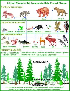 Forest succession over time six stages google search temperate forest food chain sciox Choice Image