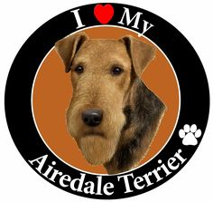 'I Love My Airedale' Car Magnet With Realistic Looking Airedale Photograph In The Center Covered In High Quality UV Gloss For Weather and Fading Protection Circle Shaped Magnet Measures 5.25 Inches Diameter ** Want to know more, click on the image. (This is an affiliate link and I receive a commission for the sales)