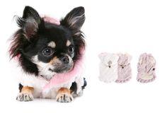 Plush Pup Fur Coat-Ivory