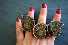 Ammonite Fossil ⊿ Ammonite Ring ⊿ Ammonite ⊿  Fossil Ring⊿ Genuine Fossil  ⊿ Ammonite Silver