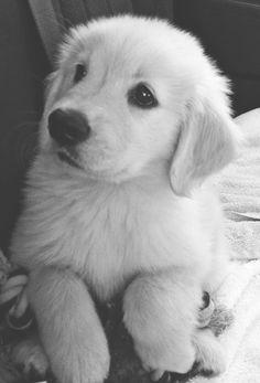 ↠{@AlinaTomasevic}↞ :Pinterest <3 | ☽☼☾ love life ☽☼☾ | Puppy!