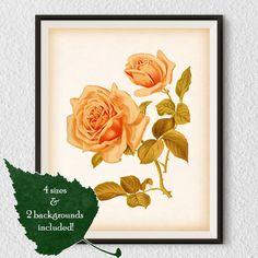 Vintage rose print 8x10 and 11x14 rose by RestoredBotanicalArt