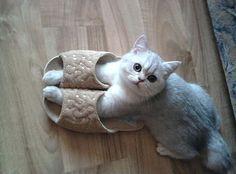 they fit