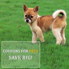 Pet Supermarket Discount Code >> 7 Best Pet Supermarket Discount Code Images Pet Supermarket