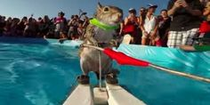 This Squirrel Waterskis Like A Rodent Boss