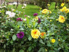 Flowers in Münchehofe, Germany