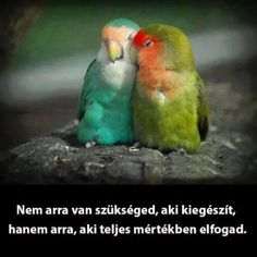 I Was Wrong About Active Rain ~ Love Birds Abound - Animals All Birds, Cute Birds, Pretty Birds, Beautiful Birds, Animals Beautiful, Cute Animals, Beautiful Couple, Beautiful Pictures, Exotic Birds