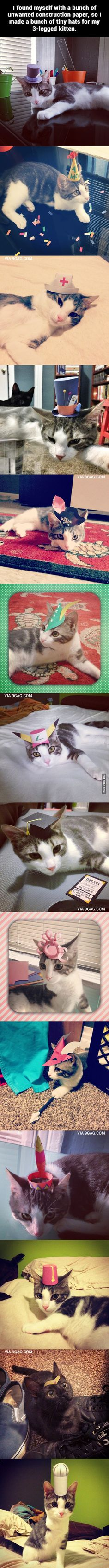 """I made a bunch of tiny hats for my 3-legged kitten."""