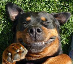 Ely - Rottweiler.  Yeah, I'm cute...